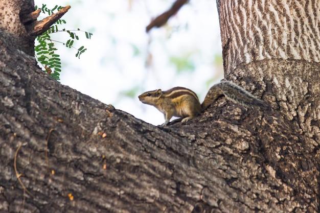 Eekhoorn of knaagdier of ook bekend als de aardeekhoorn die stevig op de boomstam staat