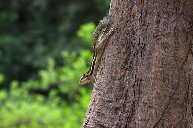 Eekhoorn op de boomstam in zijn natuurlijke habitat