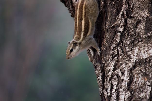 Eekhoorn op de boomstam