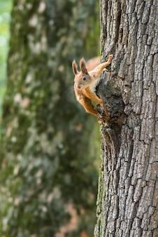 Eekhoorn op een boom in het park