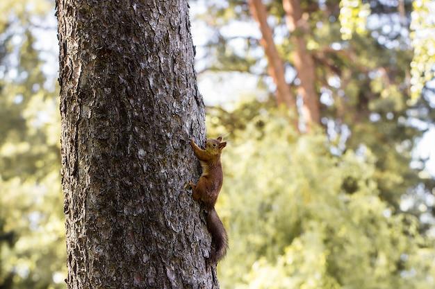 Eekhoorn op een boom