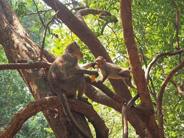 Een aap zit in een boom en deelt een banaan met een baby