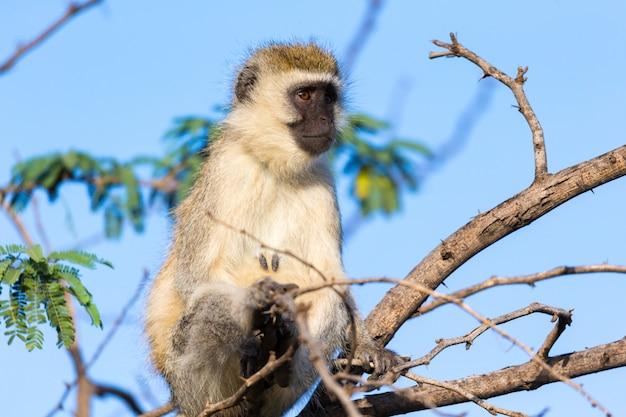 Een aap zit op de tak van een boom