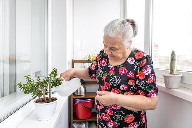 Een aardige oudere vrouw zorgt voor haar kamerplanten, verzorgt en geeft water.