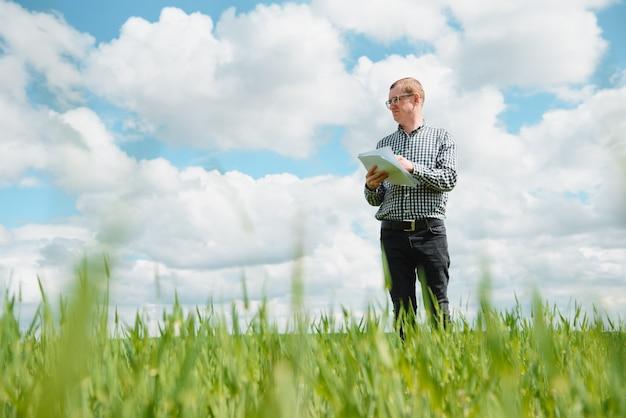 Een agronoom doet onderzoek naar het rijpingsproces van jonge tarwe in het veld. agrarische bedrijfsconcept