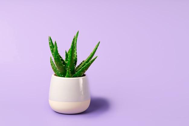 Een aloë bloem in een miniatuur potje op een mooie pastel achtergrond. minimalisme en ruimte voor tekst