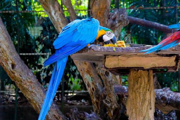 Een ara-kooi in de dierentuin