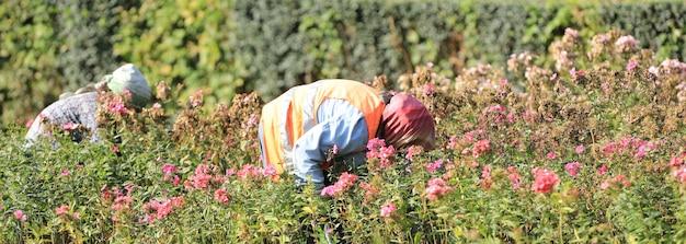 Een arbeider die aan een bloembed werkt