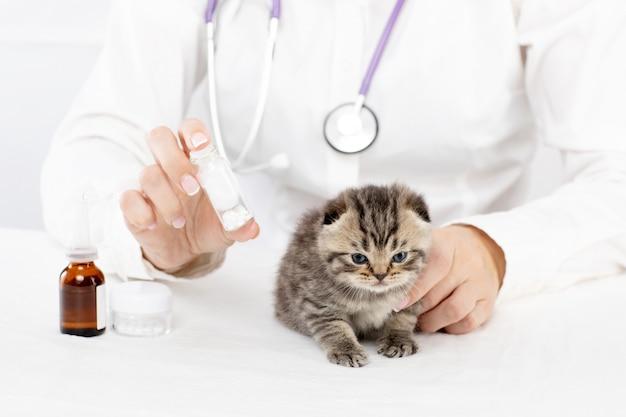 Een arts in een dierenkliniek houdt tabletten voor een klein kitten