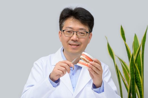 Een aziatische tandarts op middelbare leeftijd die tandmodel en hulpmiddelen van de tandheelkundeapparatuur in hand houdt.