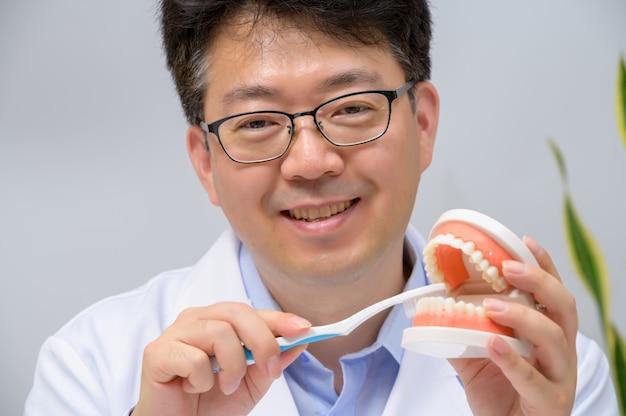 Een aziatische tandarts op middelbare leeftijd die tandmodellen en tandenborstels in zijn hand houdt.