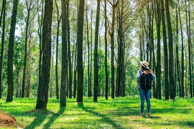 Een aziatische vrouwelijke reiziger met een hoed en rugzak die achteruitgaan en een mooi dennenbos onderzoeken
