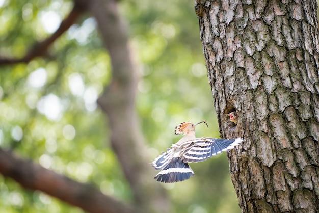 Een babyvogel op boomstam