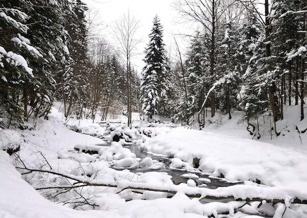 Een beekje stroomt door een besneeuwd winterbos. pijnbomen en andere bomen bedekt met sneeuw