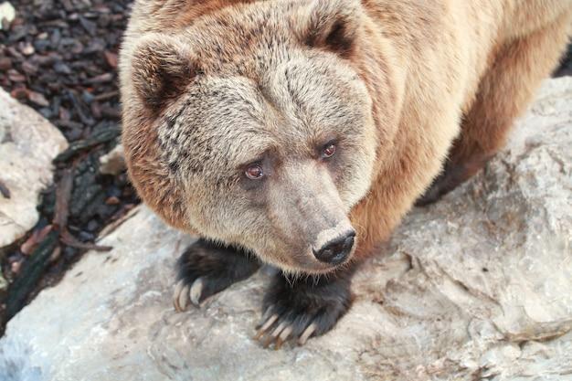 Een beer in de dierentuin