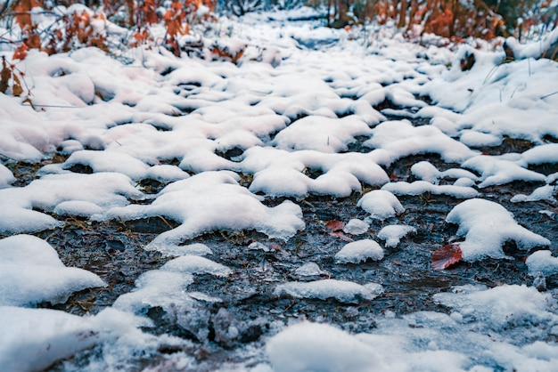 Een beetje sneeuwwitte pluizige sneeuw op transparante kleine plassen in een zonnig winterbos in de pittoreske karpaten