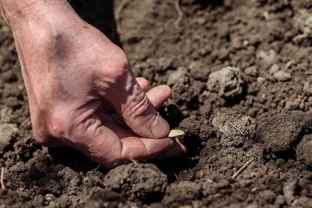 Een bejaarde die zaden in de tuin plant