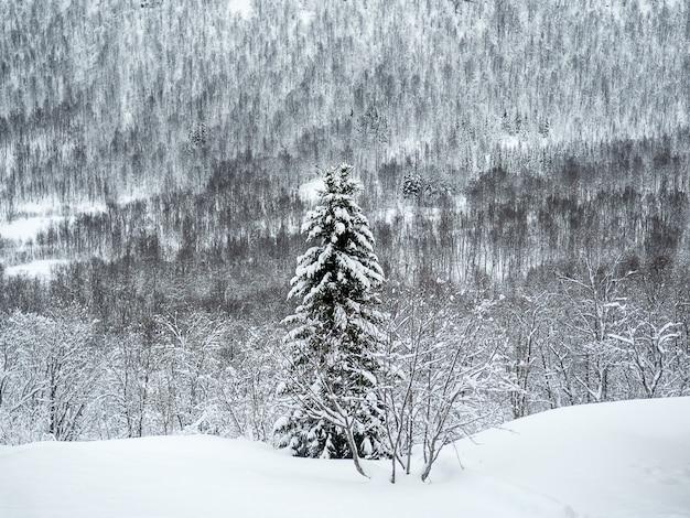 Een besneeuwde pijnboom in de middle of nowhere