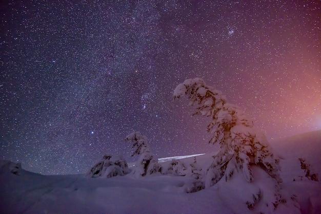 Een betoverende sterrenhemel verspreidt zich over een rustig winterskigebied met dennenbomen