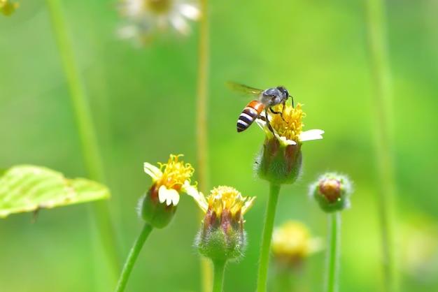 Een bij die naar de mooie bloem vliegt