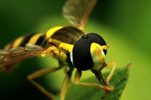 Een bij verzamelt stuifmeel en nectar