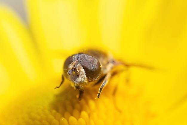 Een bij zit op een gele bloem