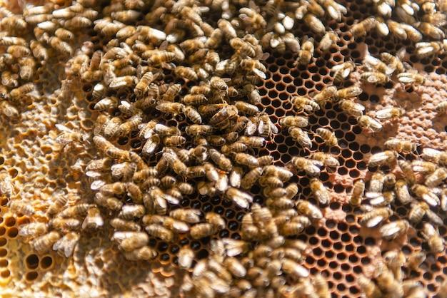 Een bijenfamilie kruipt rond haar baarmoederbij. de bijenkoningin kruipt in haar korf.