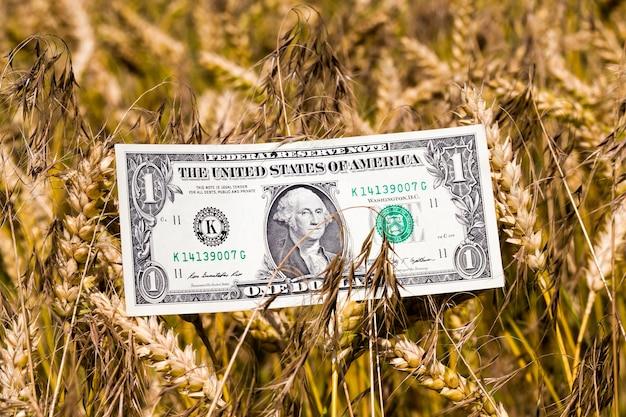 Een biljet van een amerikaanse dollar rond aartjes van tarwe, close-up in de landbouwsector