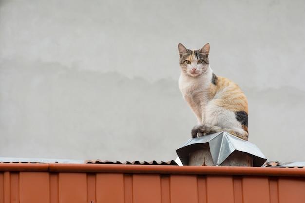Een binnenlandse bruine kattenzitting op een schoorsteenbovenkant bij dak bij koud weer