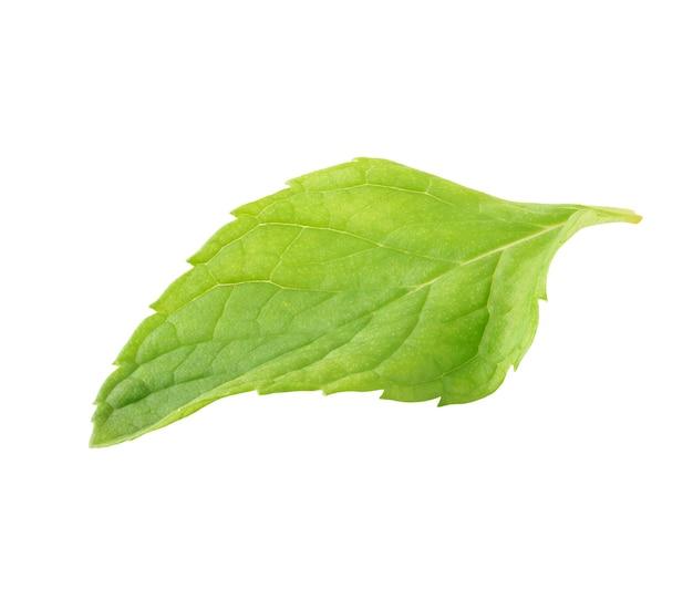 Een blad van verse munt plant geïsoleerd op wit