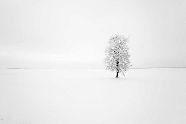 Een bladverliezende boom in de winter.