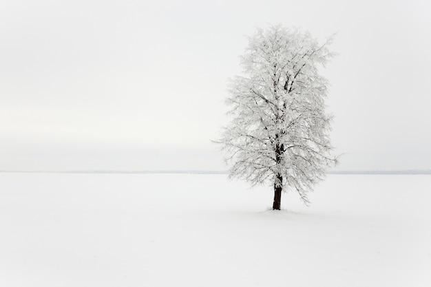 Een bladverliezende boom in een veld. winter seizoen