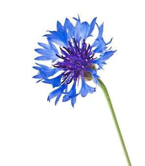 Een blauwe bloem
