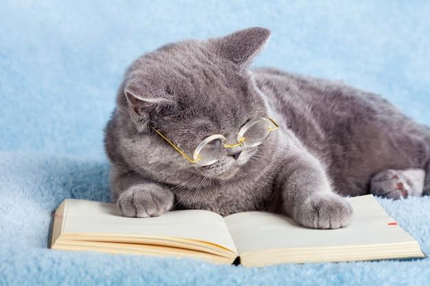 Een blauwe britse zakenkat met een bril die een notitieboekje leest (boek)