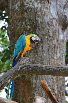 Een blauwe en gele papegaaien