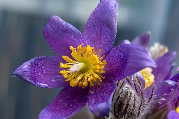 Een bloem die de komst van de lente symboliseert