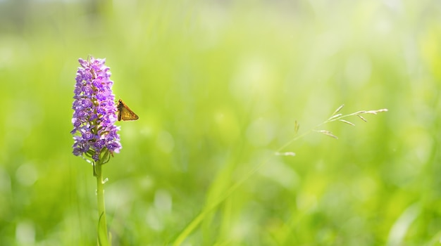 Een bloem van een meidoorn met een vlinder op een groene weide