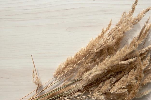 Een boeket aartjes. frame van droog riet geïsoleerd op een witte achtergrond. abstracte droog gras bloemen, kruiden op houten tafel op pastel beige achtergrond. stijlvolle woondecoratie