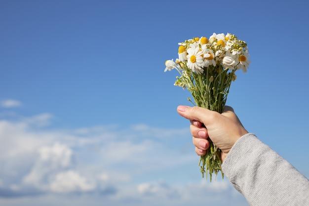 Een boeket madeliefjes in een vrouwelijke hand tegen de blauwe hemel