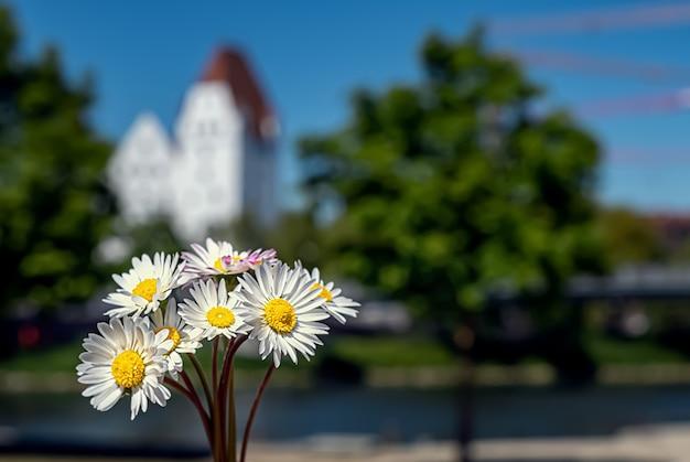 Een boeket madeliefjes op de achtergrond van het kasteel