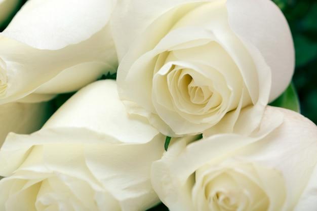 Een boeket van delicate белых rozen op een witte achtergrond.
