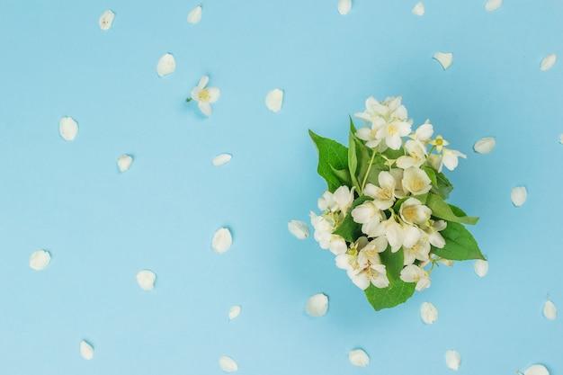 Een boeket van jasmijnbloemen en jasmijnbloemblaadjes op een blauwe achtergrond. lente bloemen. plat leggen.