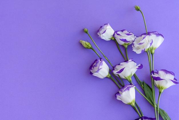 Een boeket van prachtige vers gesneden paarse eustoma op een ton achtergrond. achtergrond met mooie kleuren