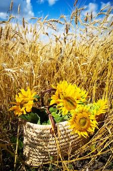 Een boeket zonnebloemen ligt in een strozak op een groot tarweveld.