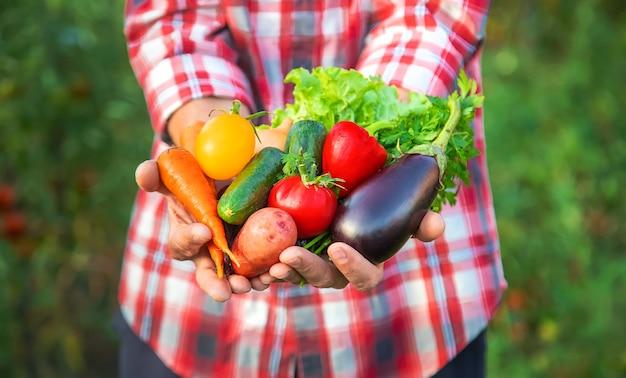 Een boer heeft een oogst groenten in zijn handen. selectieve aandacht. natuur.