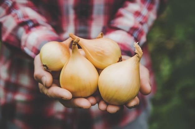 Een boer heeft een oogst uien in zijn handen. selectieve aandacht. natuur.