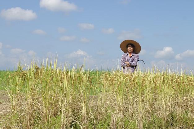 Een boer houdt een sikkel die rijstvelden oogst op een zonnige dag.