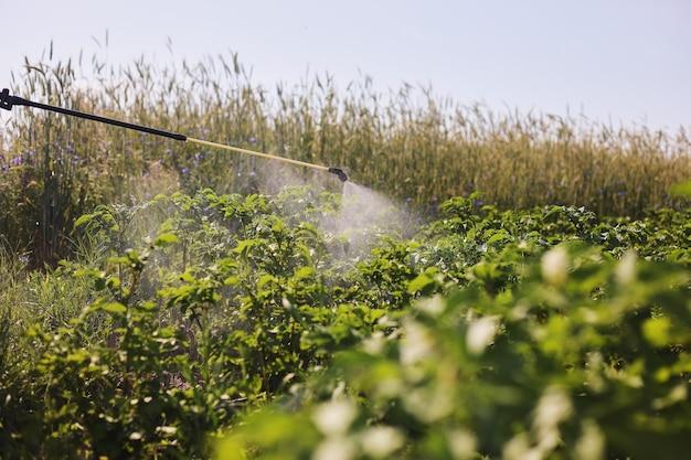 Een boer met een nevelspuit behandelt de aardappelplantage tegen ongedierte en schimmelinfecties. gebruik chemicaliën in de landbouw. landbouw en agribusiness. oogstverwerking. bescherming en verzorging.
