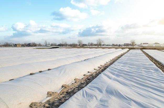 Een boerderijveld bedekt met een spingebonden niet-geweven materiaal om planten te beschermen tegen onstabiel weer