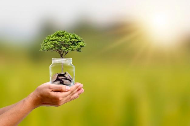 Een boom groeit in een pot, spaarkaarten met mensenhanden, milieuvriendelijke financiering en investeringsideeën.